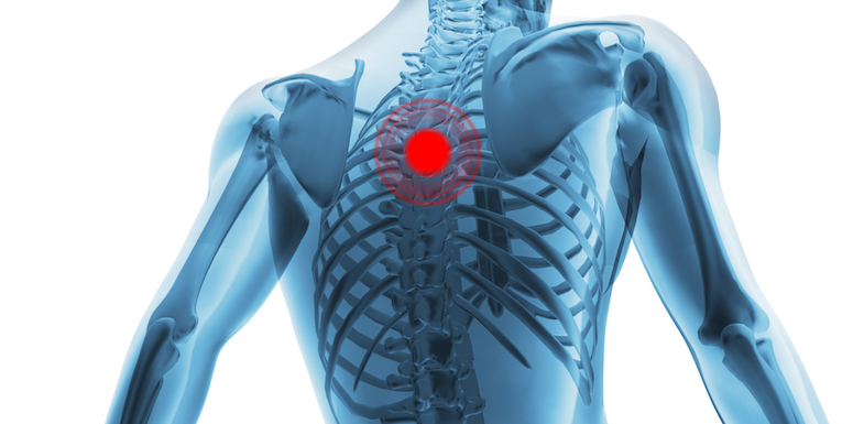 Anatomy Of The Back And Spine 101 | NVCPC.com